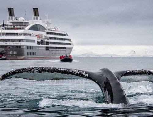 Antarctica, South Georgia & the Falklands