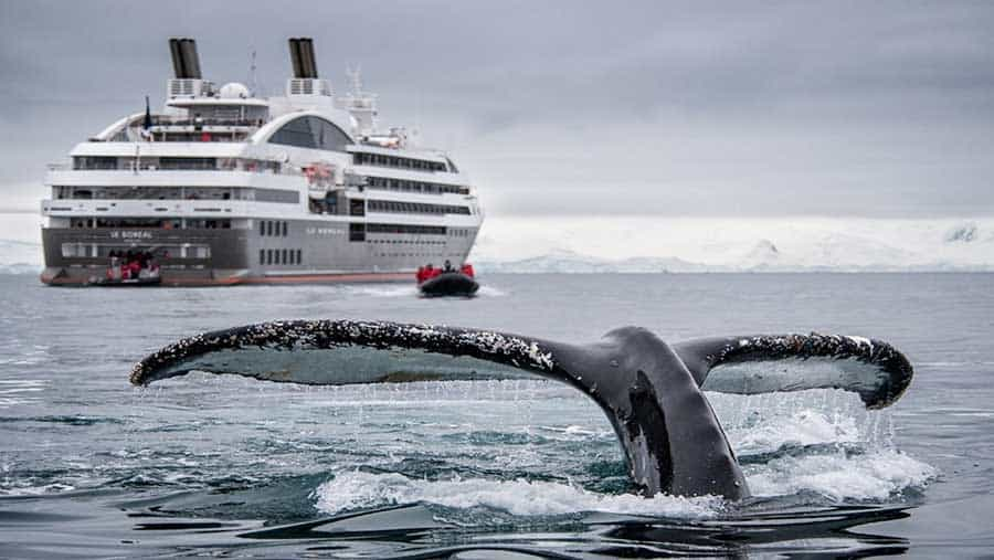 A whale's tail breaching near a cruise ship by Antarctica