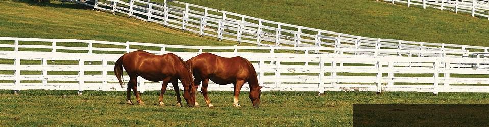 kentucky derby two horses grazing